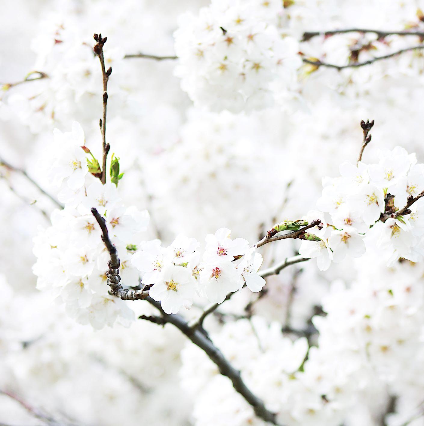 Seasonal Allergies // by Alyssa LaCourse